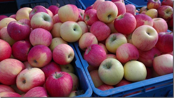 česká jablíčka