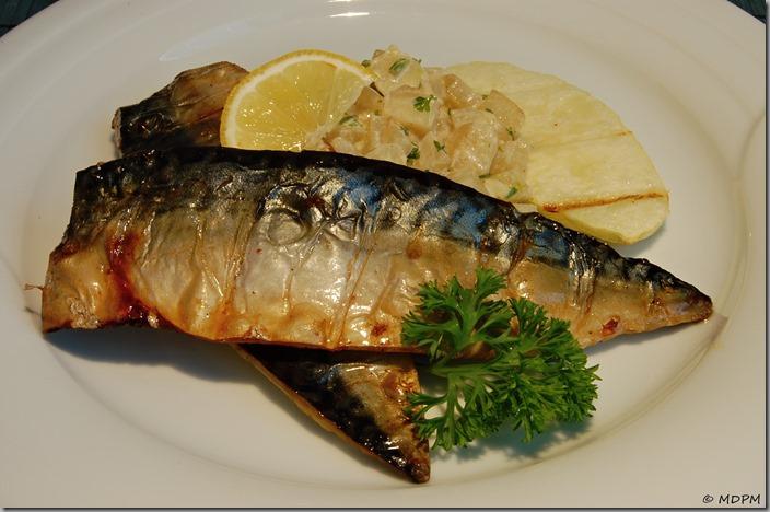 04-Grilovaná makrela a ragů z patizonu